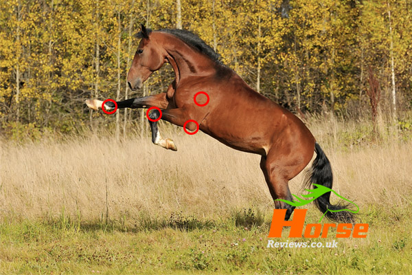 Horse Jumping Bending Joints